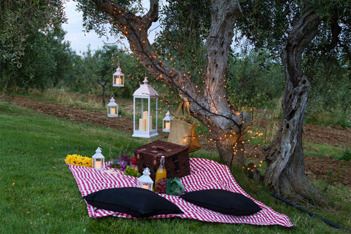 PIC NIC IN THE OLIVE GROVE IN TUSCANY